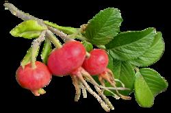 Nature, feuilles, fleurs, arbres, pommes de pin,fruits (Automne)