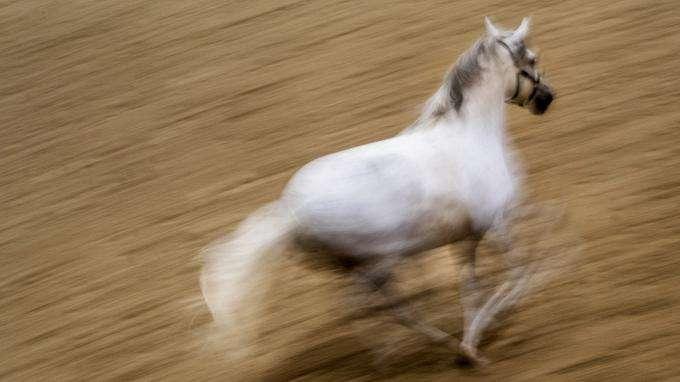 Un cheval s'échappe et provoque un accident sur le circuit des 24 Heures du Mans