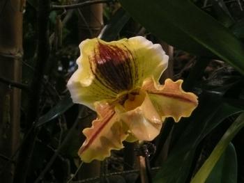 2013-Expo orchid Pont sainte Marie 006