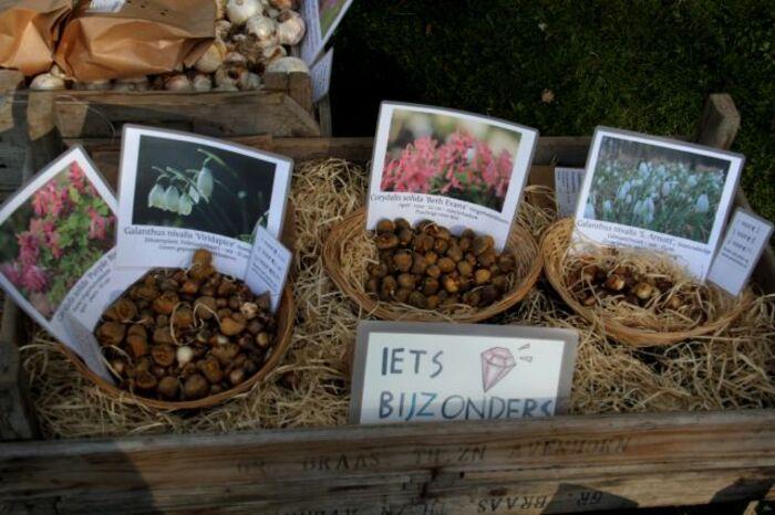 Beervelde - Octobre 2014 : Au Pays des Fées et des Elfes