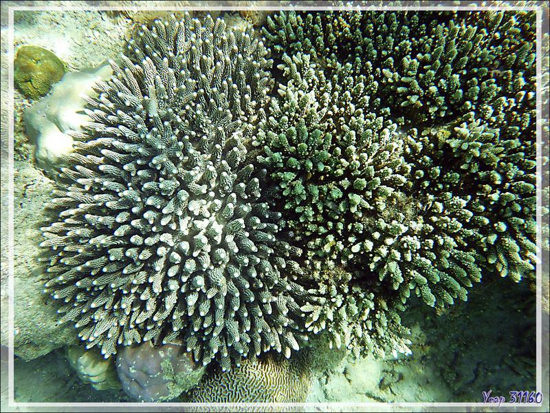 Snorkeling à Grande Mitsio : coraux - Madagascar