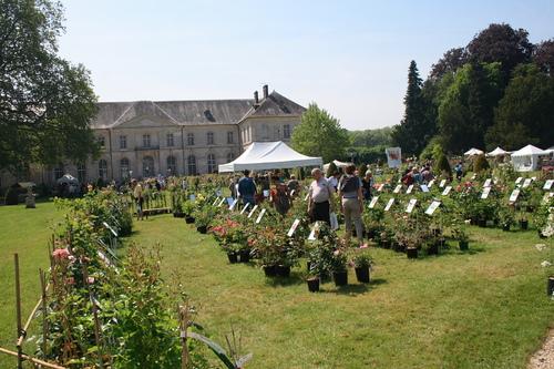 Abbaye de Chaalis. Les journées de la rose 2013