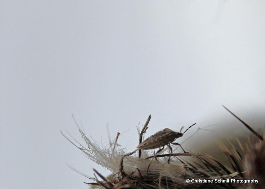 Le petit zoo en liberté de la prairie (1)