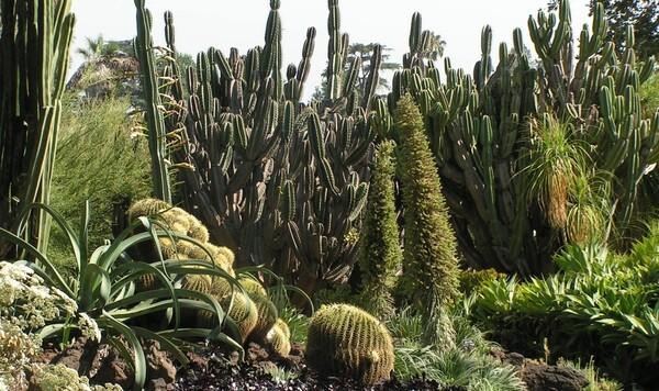 huntington-cactus1.jpg