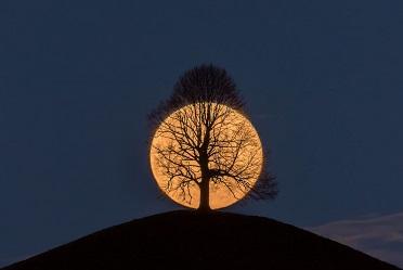 L'arbre et la lune ...