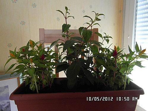 mes-fleurs-007.JPG