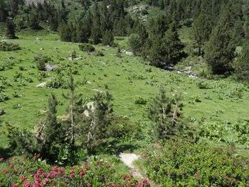 Un champ de gentianes avant d'atteindre le pied de l'échelle de Boutadiol