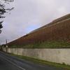 Les vignes en pente à Mareuil sur Aÿ