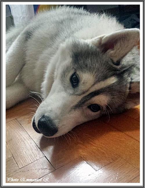 Iankee (6,5 mois)