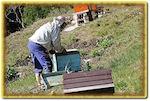 Des abeilles aux jardins familiaux et ouvriers