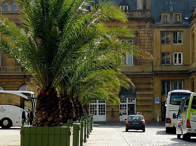 Les palmiers de Metz 2 Marc de Metz 15 09 2012