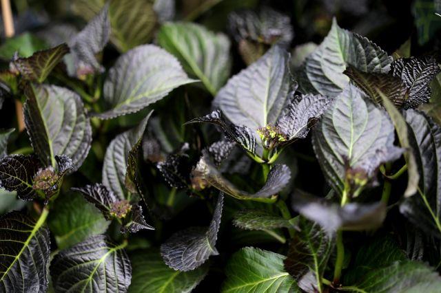 Famiflora - Printemps 2019