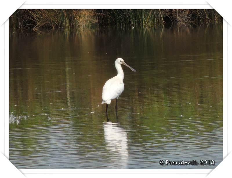 Pause ornithologique estivale au Teich - 3/12