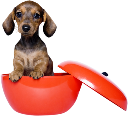 Tubes Animaux.. Chiens