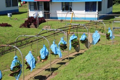 Costa Rica : de San José à Tortuguero
