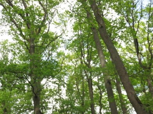 Peinture en forêt de Barbizon: Jules et Max