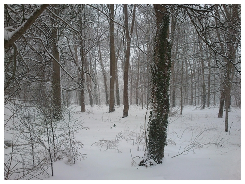 La neige...cette merveille