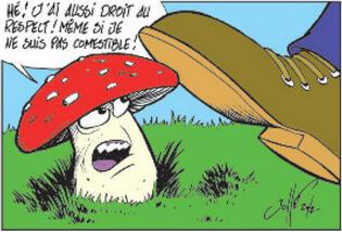 Le thème du champignon : la suite des ami(e)s !