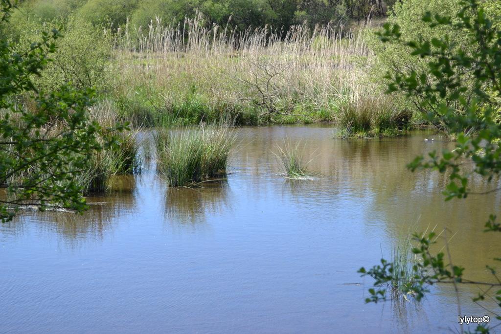 Le lac de Bruyère à Millières (5)