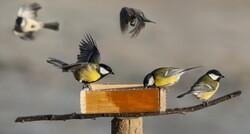 Au jardin des oiseaux en avril 2016