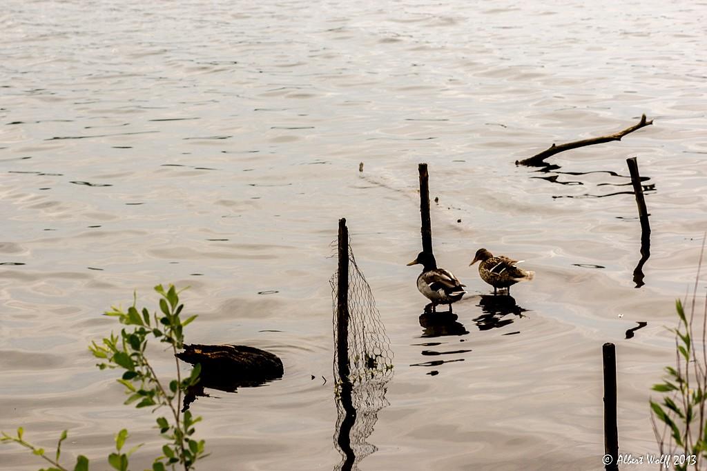 Au fil de l'eau - Part 3 -