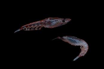 Stop aux prédateurs des mers ...
