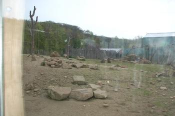 Zoo Osnabruck d50 2012 056