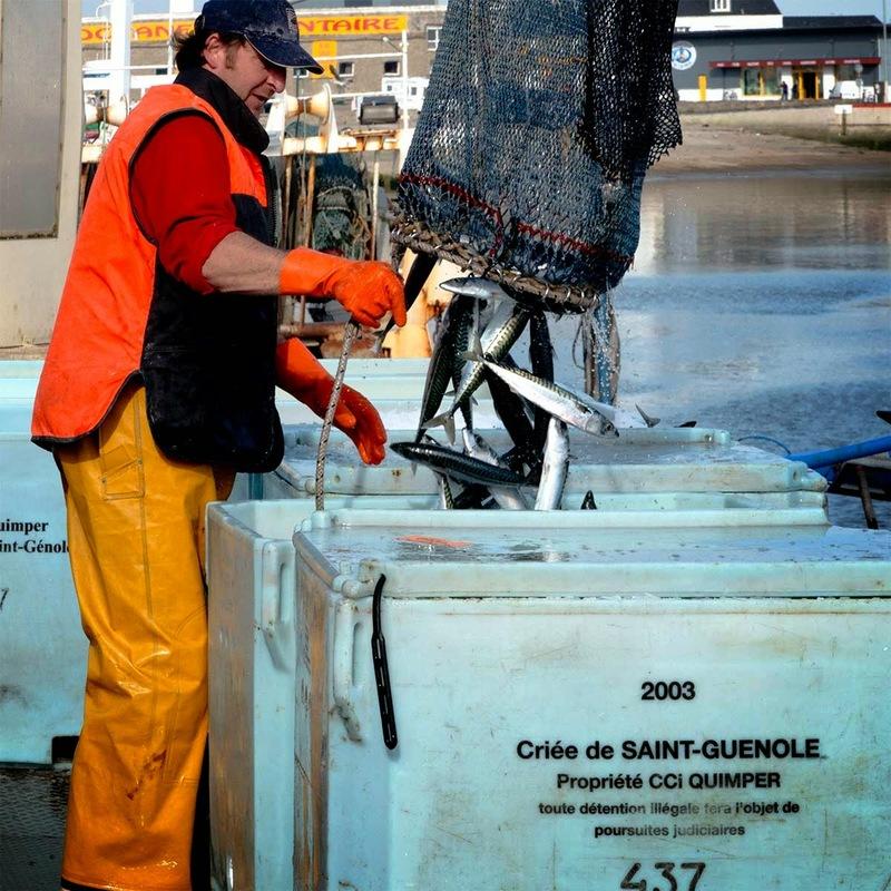maquereaux Guilvinec- retour de pêche