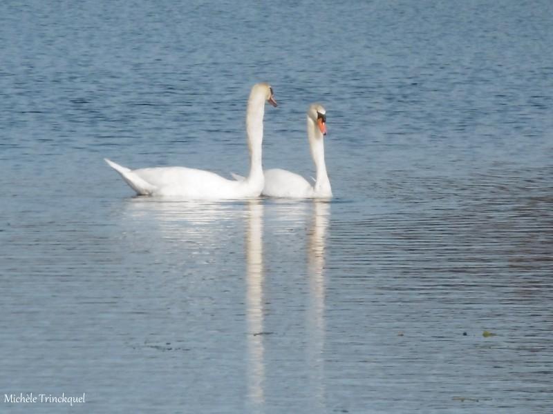 Une balade au Lac le 24 janvier (suite)...