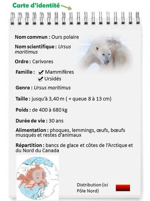 DECEMBRE : L'ours polaire