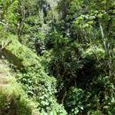 La végétation luxuriante du sentier de randonnée - Photo : Edgar