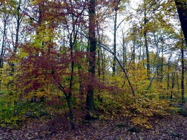 Les étangs et la forêt de Meudon à l'automne