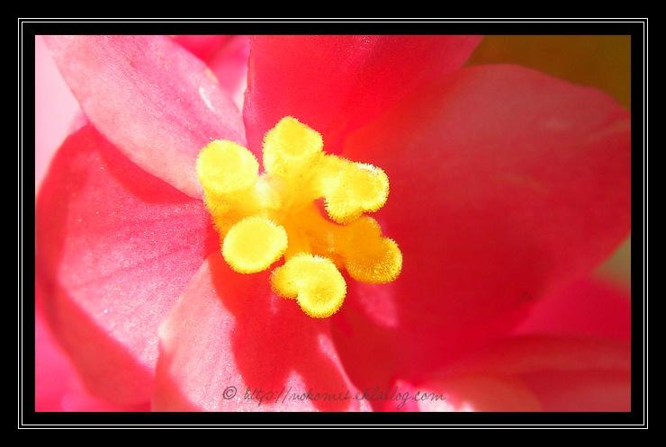 Telle une abeille, au coeur des fleurs