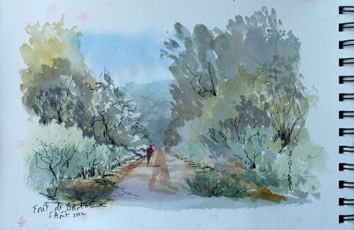 Forêt de Brotonne (nouvelle balade)