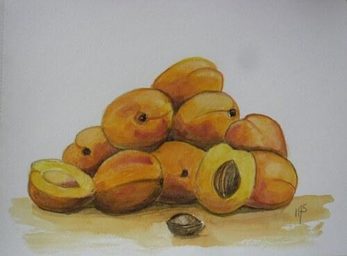 De délicieux abricots peints en 2107 et 2018