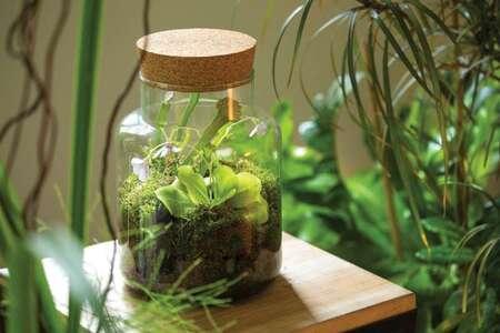 Créer un jardin de poche en 10 points