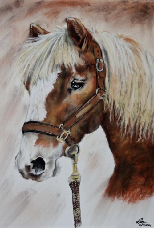 Portrait équin