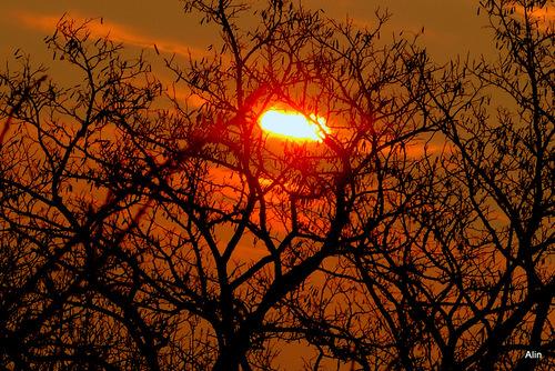 Soleil du soir dans les arbres