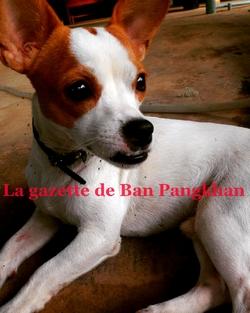La gazette de Ban Pangkhan (34). Du 25/04 au 10/10/2016