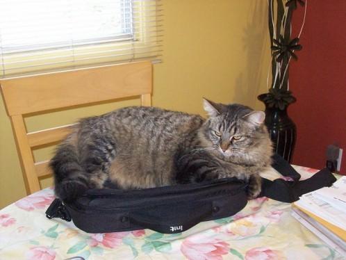 sac-portable1.jpg
