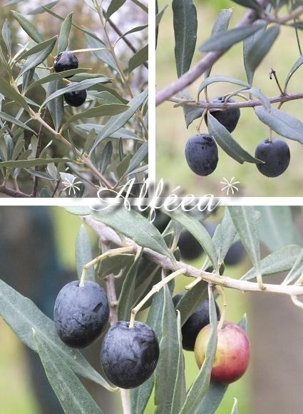 48-2012 olivier2