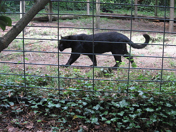 robe;Zoo de Beauval 27 juillet 2009 283