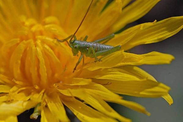 Insectes-papillons-3 3630 modifié-1