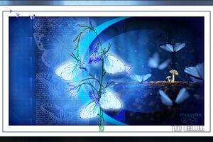 morpho bleu de Libelule