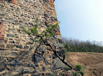 Bessenay - Les cerises - les insolites