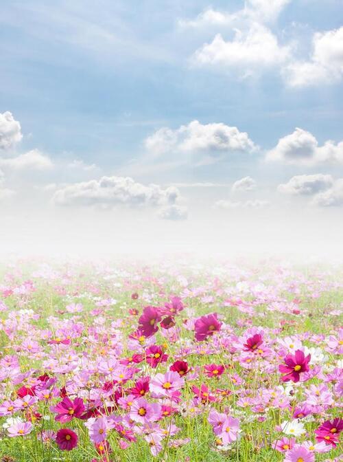 La rose de prairie ,