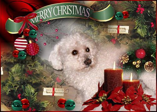 Joyeux Noël à nos compagnons