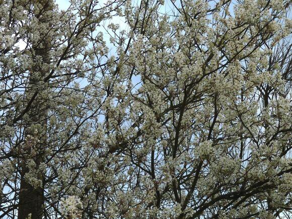 Le printemps m'appelle au jardin