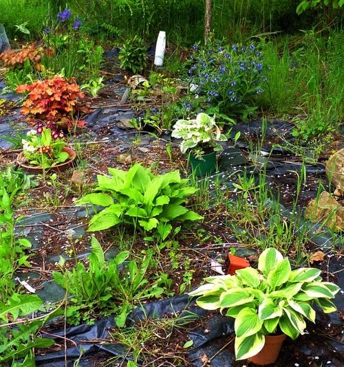 plantes d'ombre