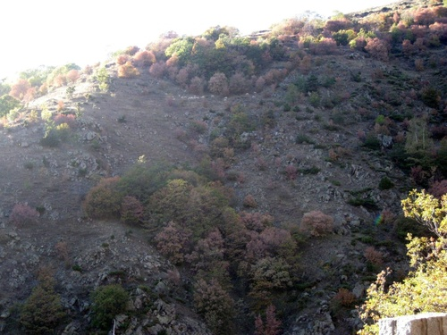 L'été dans les Pyrénées Orientales (Capcir, Haut Conflent)